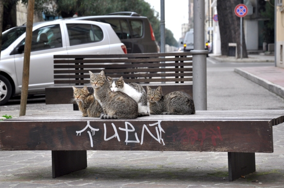 006 A Picture of Cats